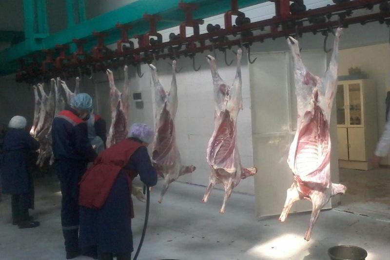 Около тысячи тонн баранины поставит в Иран Жамбылская область
