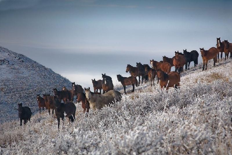 Компенсацию получат владельцы погибших лошадей в Карагандинской области