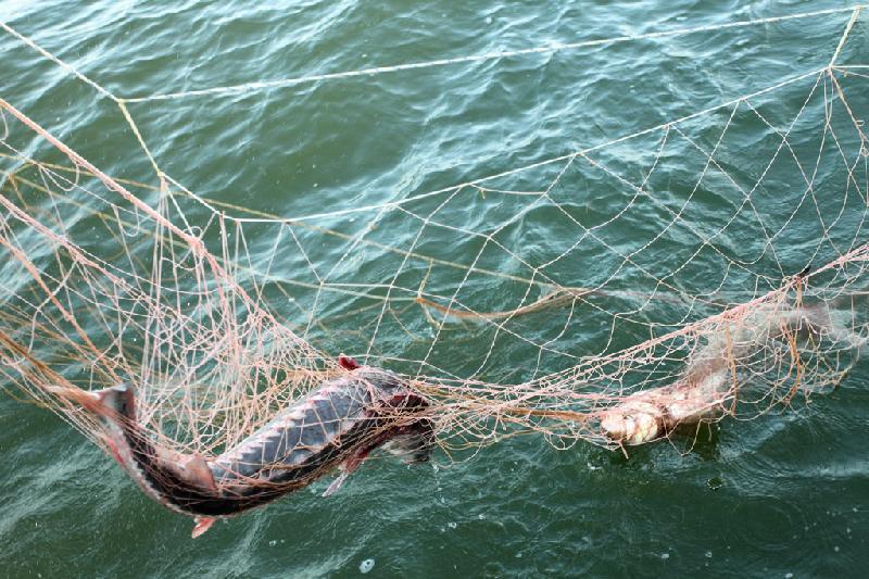 200 метров браконьерских сетей изъяли прокуроры в Павлодарской области