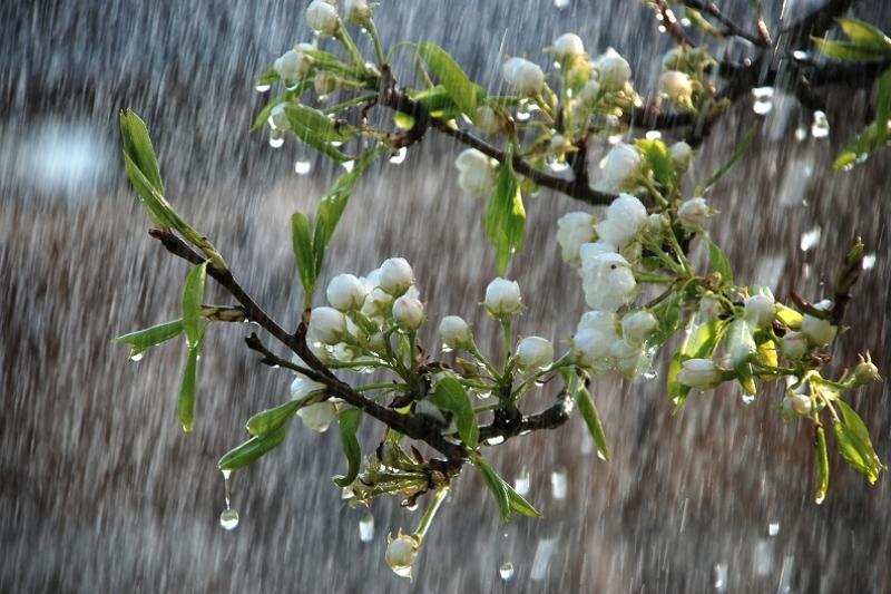 На выходные в Алматы ожидаются дожди