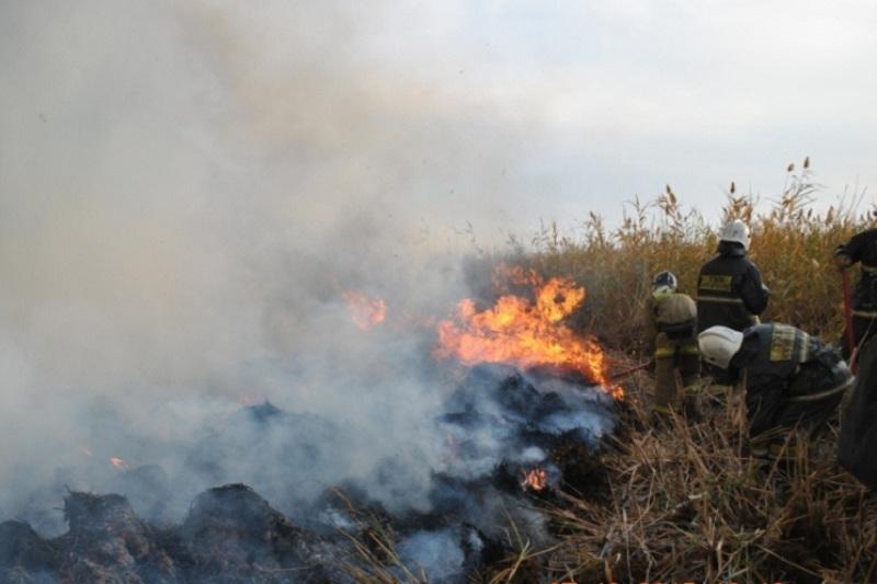 На побережье Каспийского моря сгорело 10 га зарослей