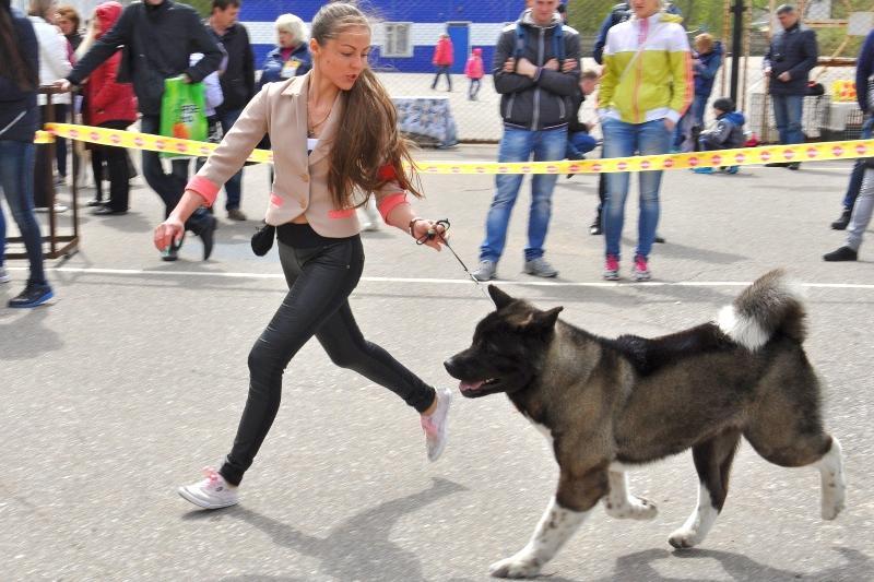 Международная выставка собак прошла в Павлодаре