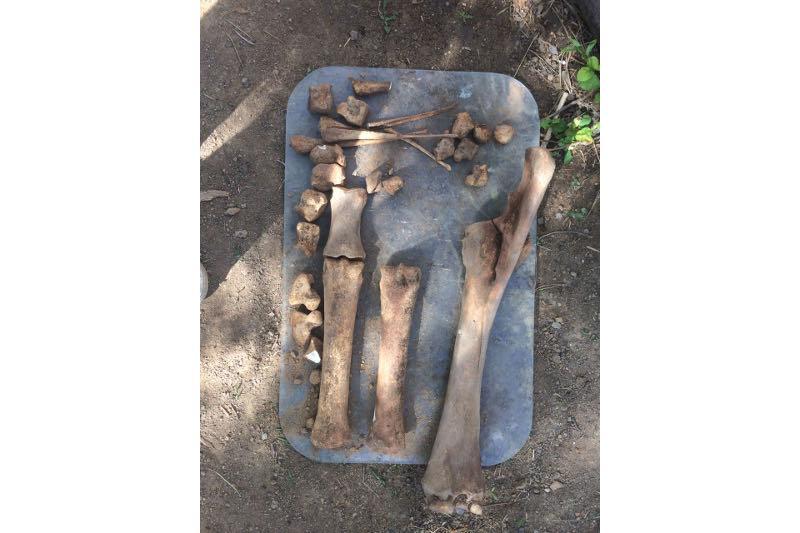 Находка из Павлодарской области является частью погребения кимаков - археолог
