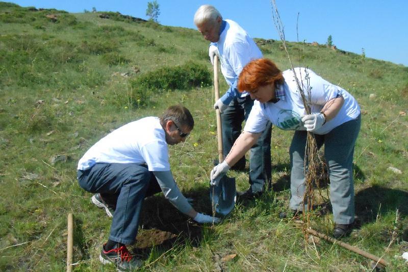 На склоне горы Казахстан рождается «Народный лес»