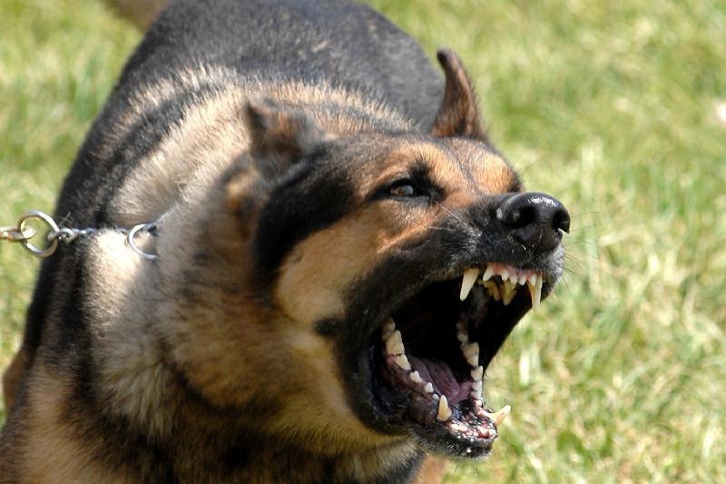 Хозяина покусавшей ребенка собаки оштрафовали в Атырау