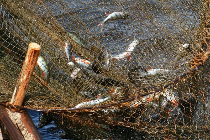 Промышленный лов рыбы в Каспийском море может стать запретным