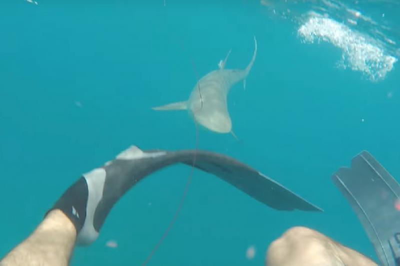 Дайвер акуланың өзіне шабуыл жасаған сәтін көрсетті