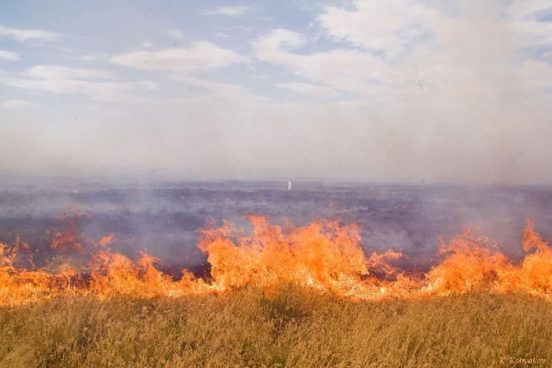 6 тысяч гектаров пастбищ сгорело в Атырауской области