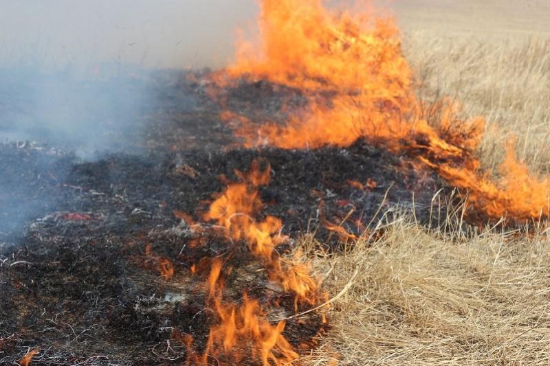 Пять гектаров пастбищ выгорело за сутки в Атырауской области