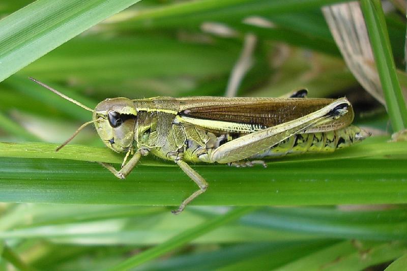 1,8 млн га подвергли химобработке для борьбы с саранчой - Минсельхоз