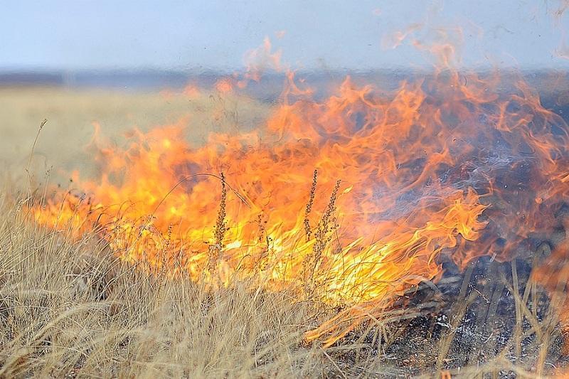 Тысяча гектаров пастбищ выгорела в Атырауской области