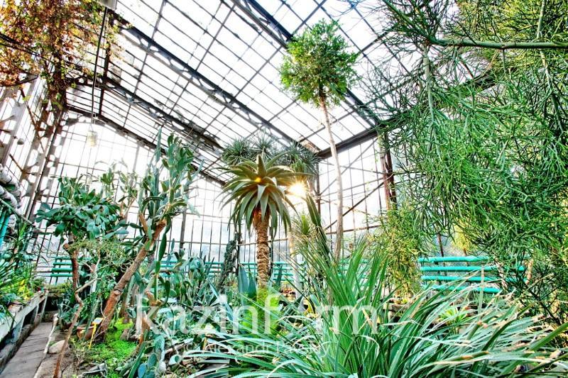 Содержать инфраструктуру Ботанического сада Алматы будет акимат
