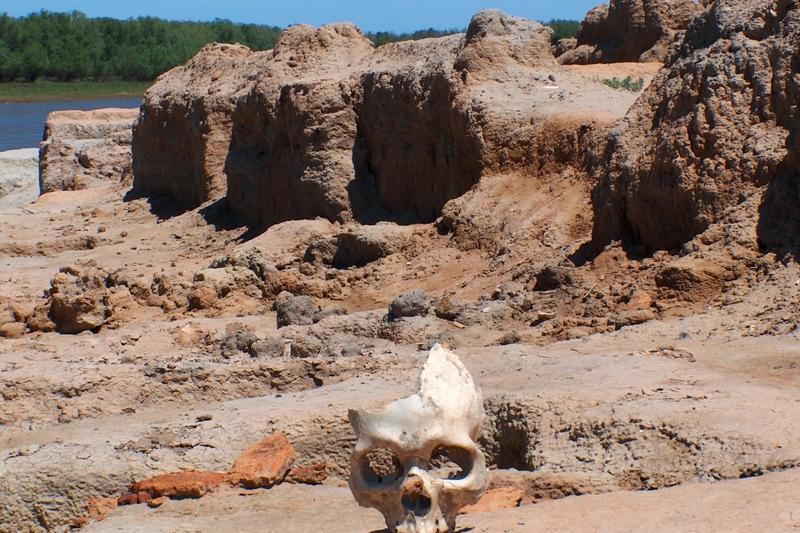 Возобновились раскопки городища Сарайшык в Атырауской области