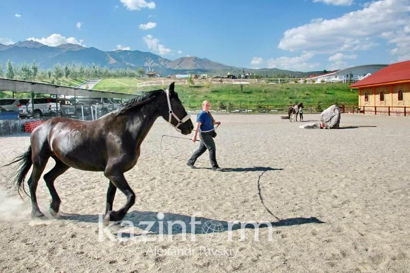 Лучший в мире выводчик арабских лошадей проведет мастер-классы в Алматы