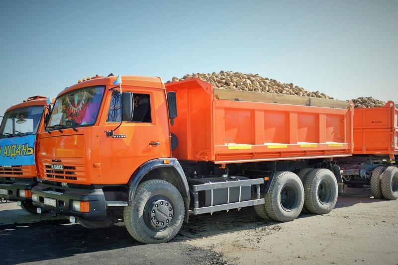 В Алматинской области начали собирать урожай сахарной свеклы