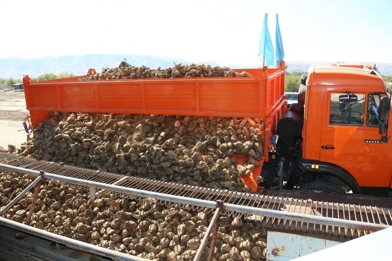 Алматы облысында 10 жыл қаңырап тұрған қант зауыты іске қосылды