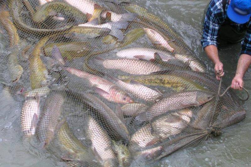 5,5 км браконьерских сетей изъяли полицейские в Атырау