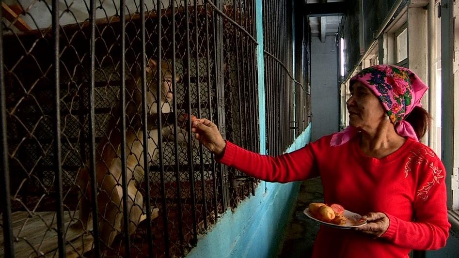 В зоопарке Шымкента появились общительные обезьяны