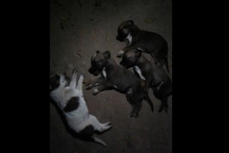 Из окна выбросила шестерых щенят жительница Балхаша