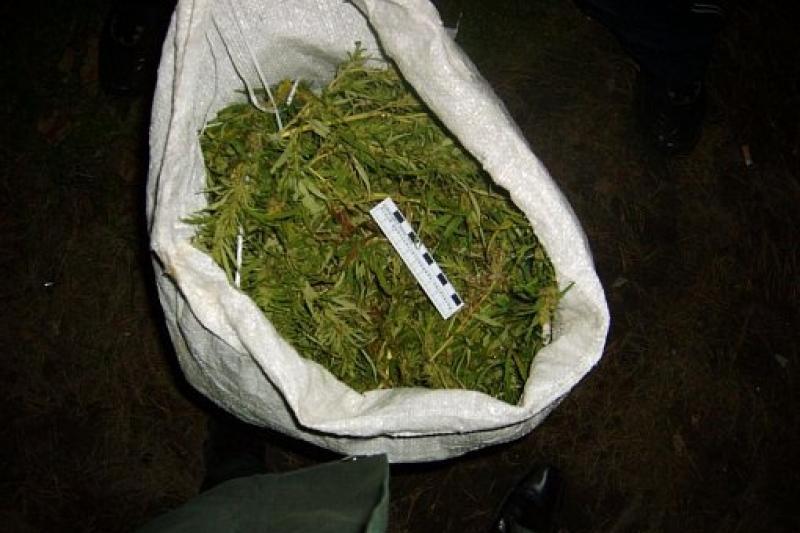 Жамбылда 48 жастағы тұрғыннан 160 келіге жуық кептірілмеген марихуана тәркіленді