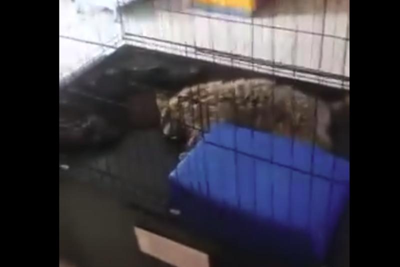 Хозяйка погибших в зоопарке Павлодара животных настаивает на экспертизе
