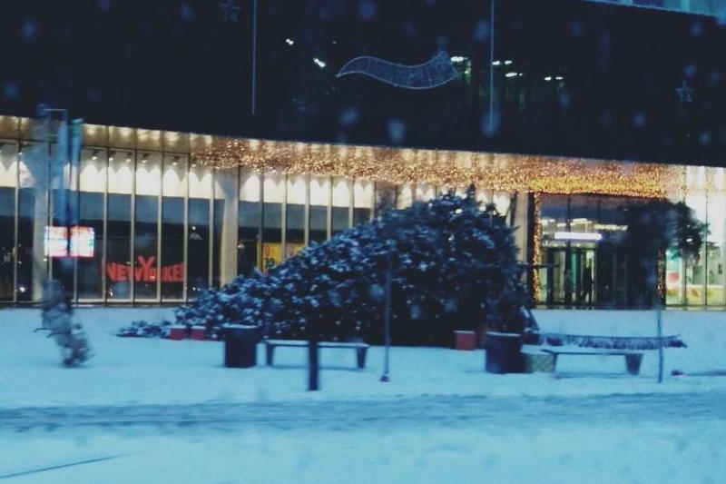 Поваленные ураганом новогодние елки в Шымкенте будут восстановлены