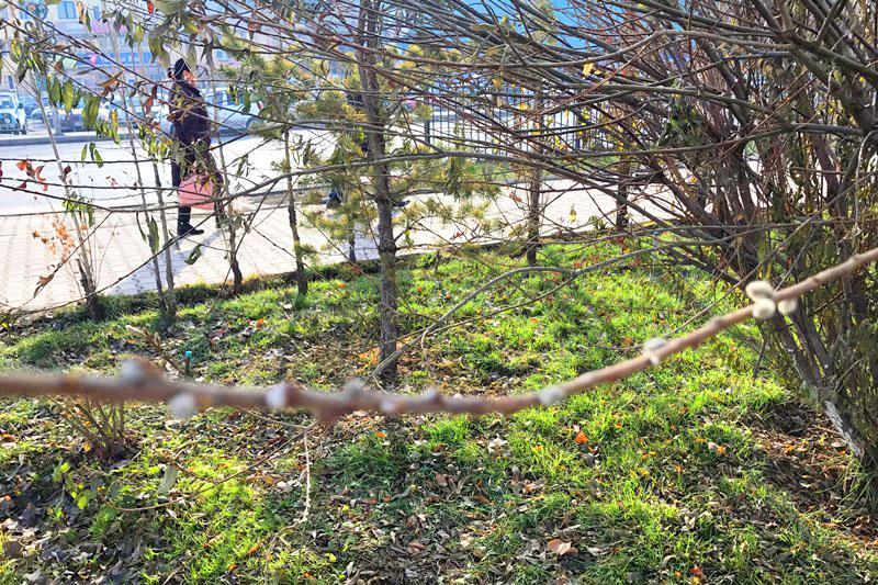 В Шымкент в начале января пришла аномальная весна