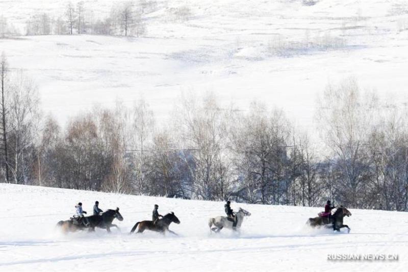 Фестиваль выслеживания волков стартовал в китайском Алтае – обзор зарубежной казахскоязычной прессы