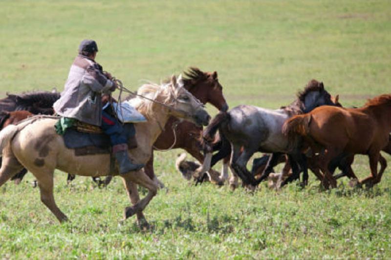 Больше 4 млн тенге задолжал проворовавшийся пастух в Павлодарской области