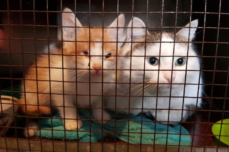 Первый в Казахстане реабилитационный центр для животных создают в Павлодаре