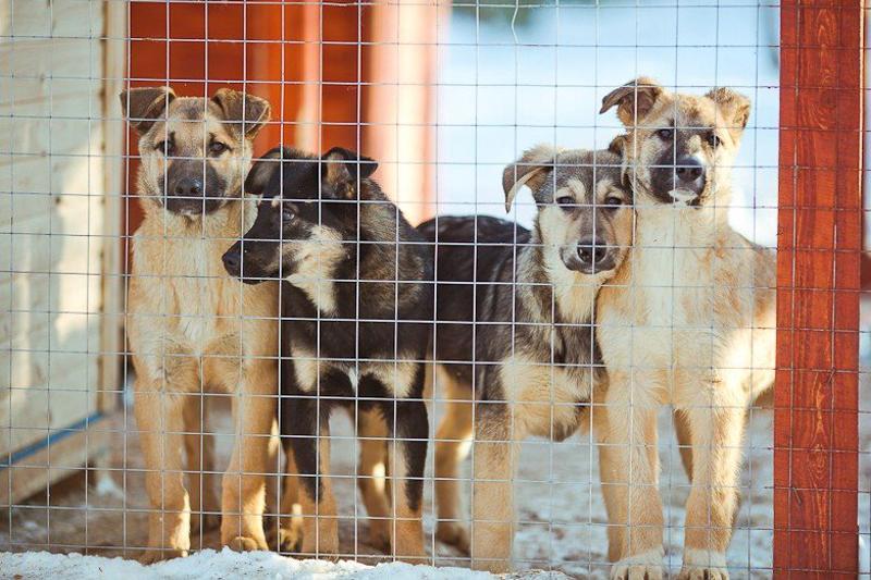 Питомник для бездомных животных появится в пристоличном регионе
