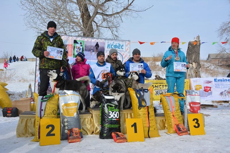 Первые международные гонки на собачьих упряжках прошли в Павлодаре