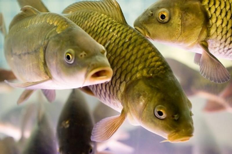 Треть рыбы озера Былкылдак в Павлодарской области подверглась мутации