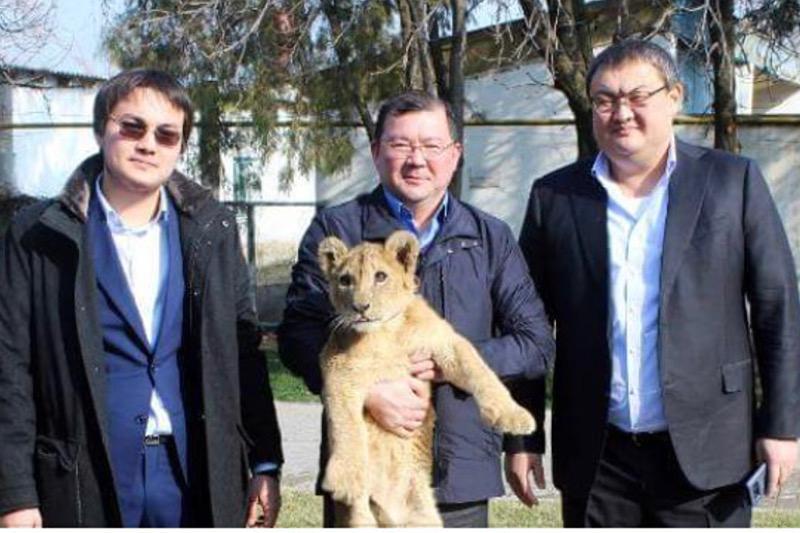 Львенка подарили зоопарку Шымкента