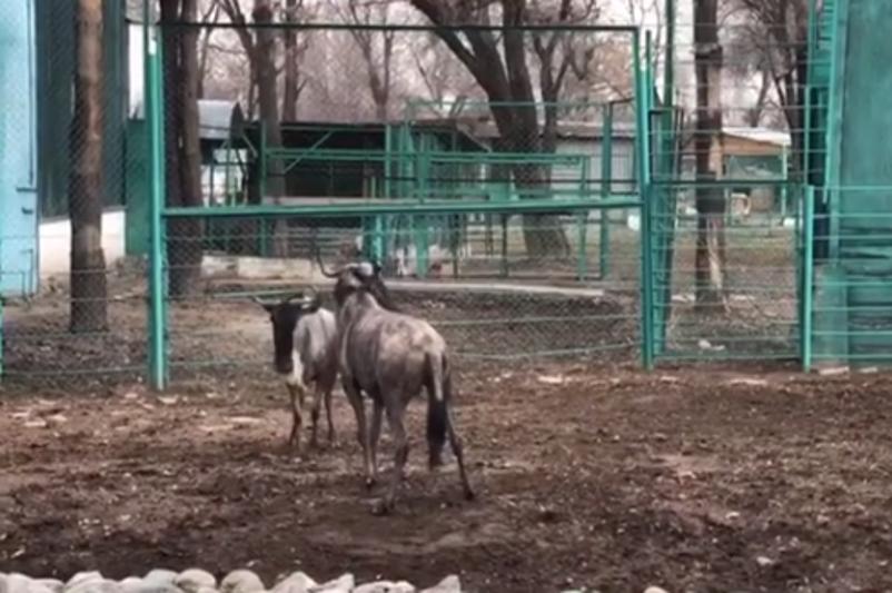 Күншуақтап жүрген зообақ жануарларының видеосы көпшілікті сүйсінтті
