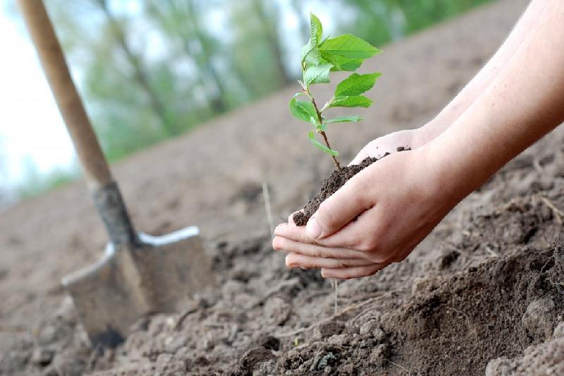 95 деревьев высадит частная фирма за вырубку зелёных насаждений в Павлодаре