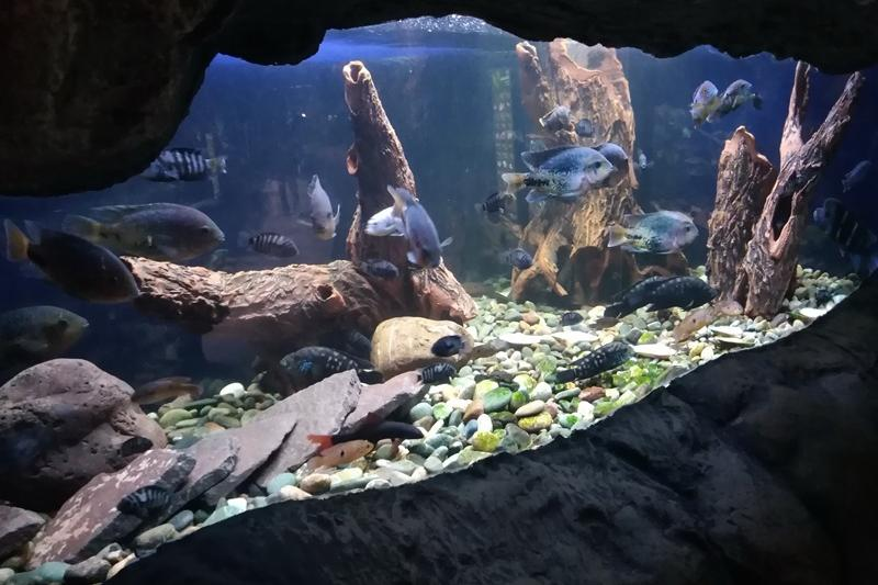 Аквариум с акулами, муренами и медузами открыли в зоопарке Алматы