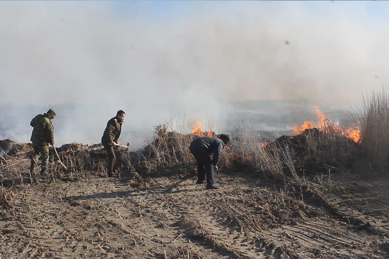 Пожар в атырауском заповеднике «Акжайык» ликвидирован