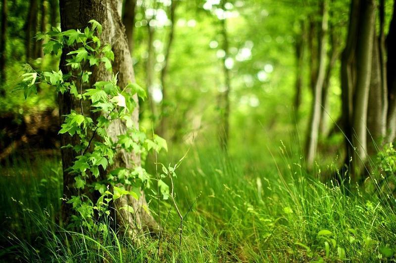 Природный парк могут создать в Атырауской области