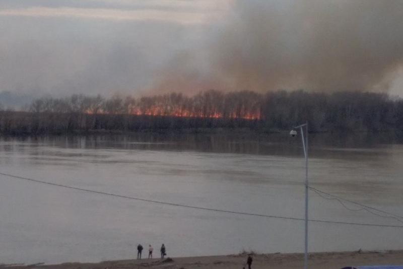 На левом берегу Иртыша в Павлодаре горит пойма