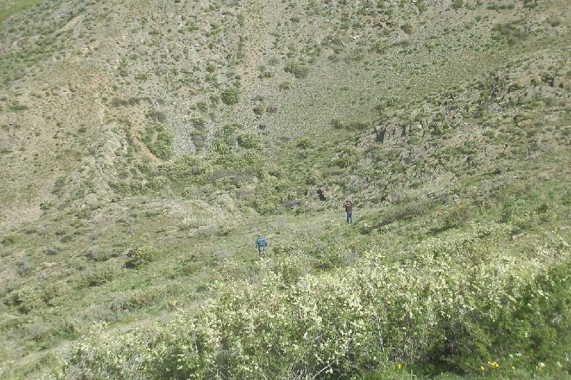 Пенсионерка ушла за грибами и потерялась в Алматинской области