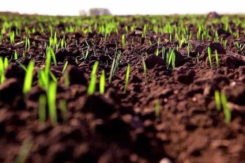 Посевные площади увеличат в Павлодарской области