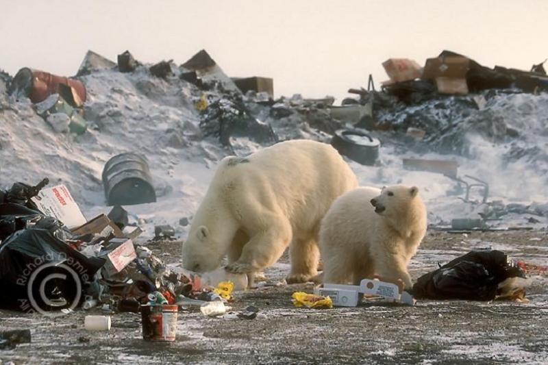 Солтүстікқазақстандықтарды Арктиканың қоқысын тазалауға шақырды