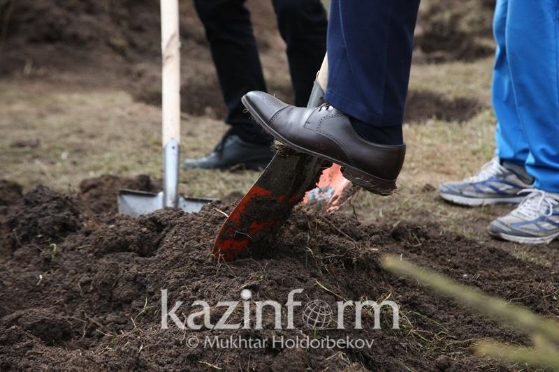 Саженцы на миллион тенге похитили в Алматинской области