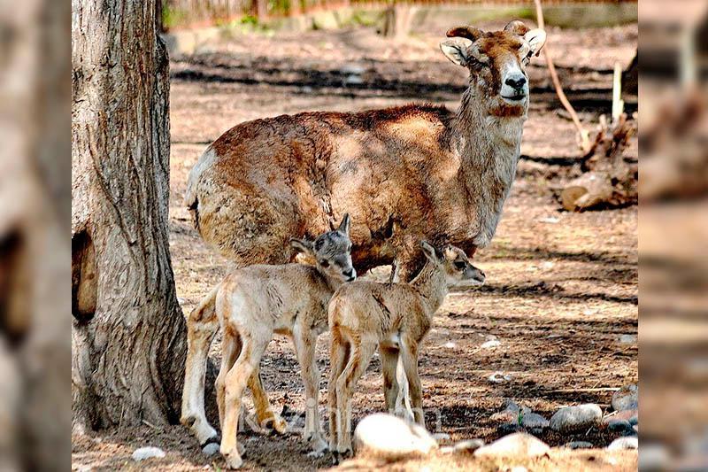 哈萨克斯坦首个野生动物园将在卡拉干达州建立