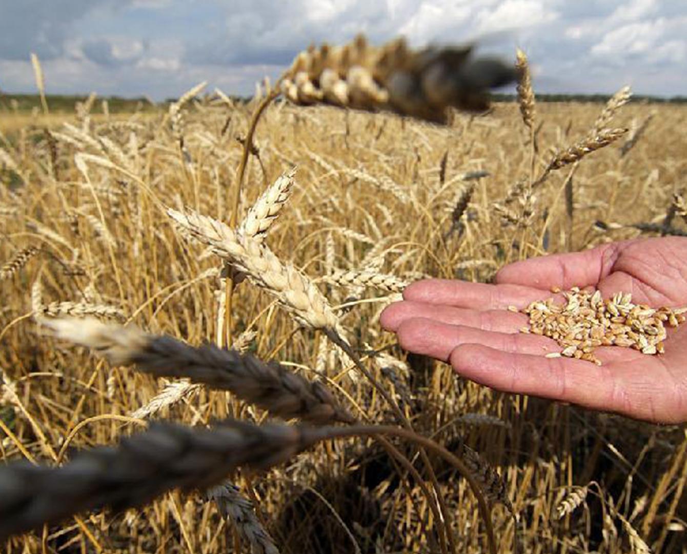 Аграриям будут возмещать затраты на семена