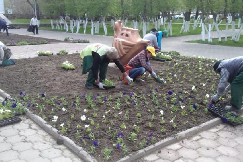 В Караганде посадят около 900 тысяч цветов