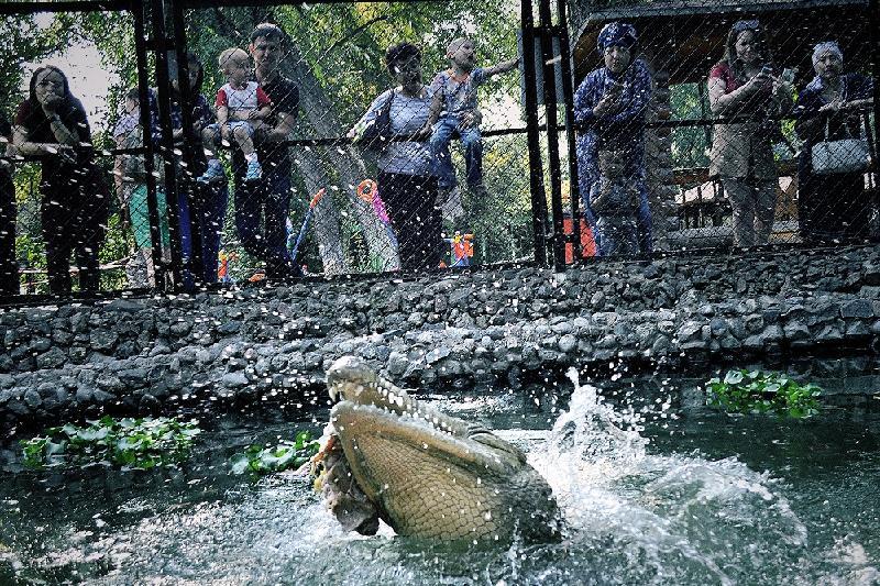 Об особенностях кормления крокодилов рассказали в Алматинском зоопарке