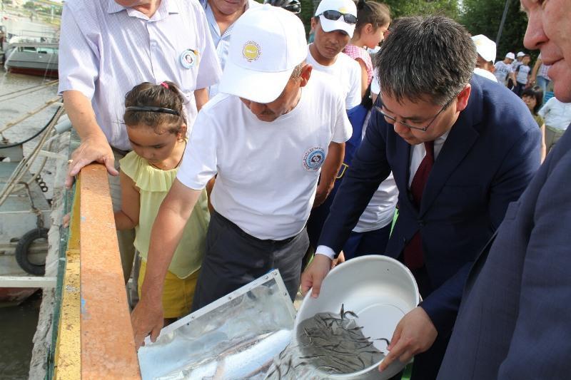 20 тысяч мальков севрюги выпустили в честь Дня рыбака в Атырау