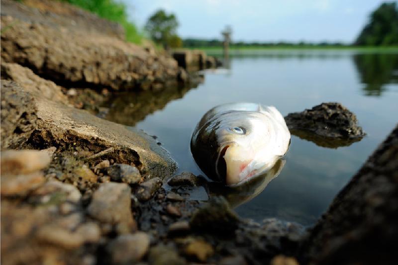 Массовая гибель рыбы произошла в Атырауской области
